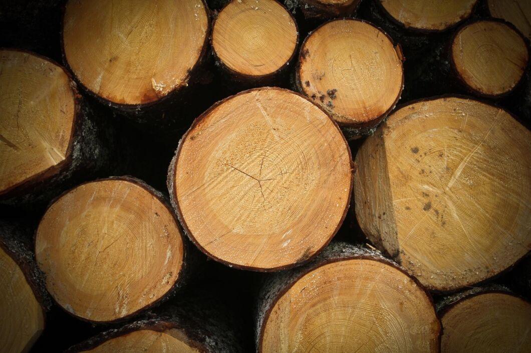 Finland och Sverige ska inleda en rad gemensamma skogsforskningsprojekt.