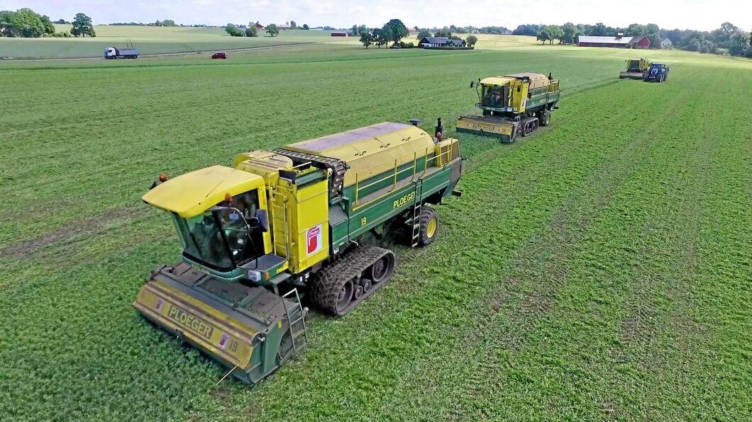Arkivbild. Bilden från förra årets ärtkampanj. Foodhills har även öpt två tröskor från Findus.