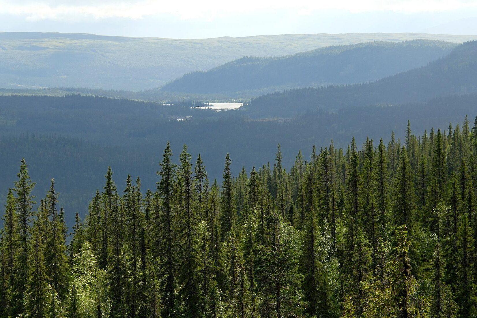 En skogsägare i Sorsele får drygt 350 000 kronor i ersättning sedan Skogsstyrelsen avslagit hans ansökan om avverkning.
