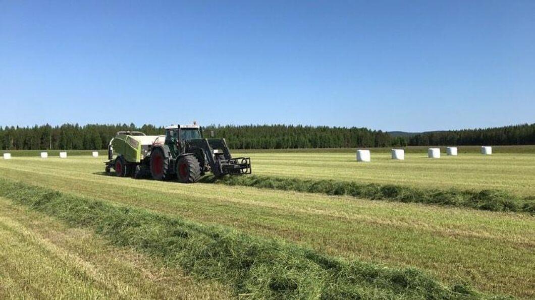 Till sommaren skördar Brattens lantbruk sina arrenden som vanligt men de vet inte vad som händer sedan. Några andra gårdar kommer att utöka och ta över ett antal hektar av den arrenderande marken, men allt är inte löst i nuläget.
