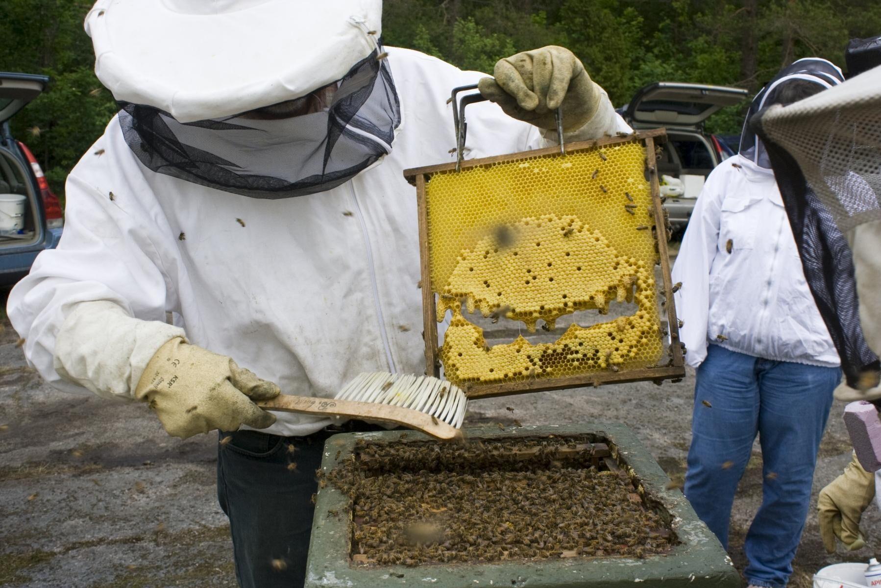 Stölder och skadegörelse mot biodlare innebär stora förluster, och inte bara för den enskilde biodlaren.