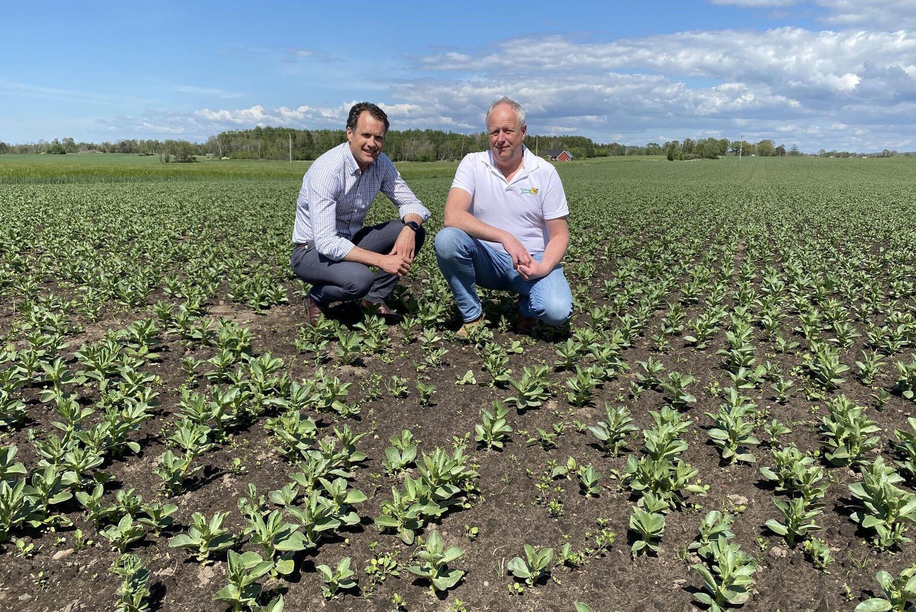 Vallberga Lantmän har kapacitet för mer åkerböna, enligt vd Jörgen Karlsson (till vänster) och foderchef Jörgen Tagesson.