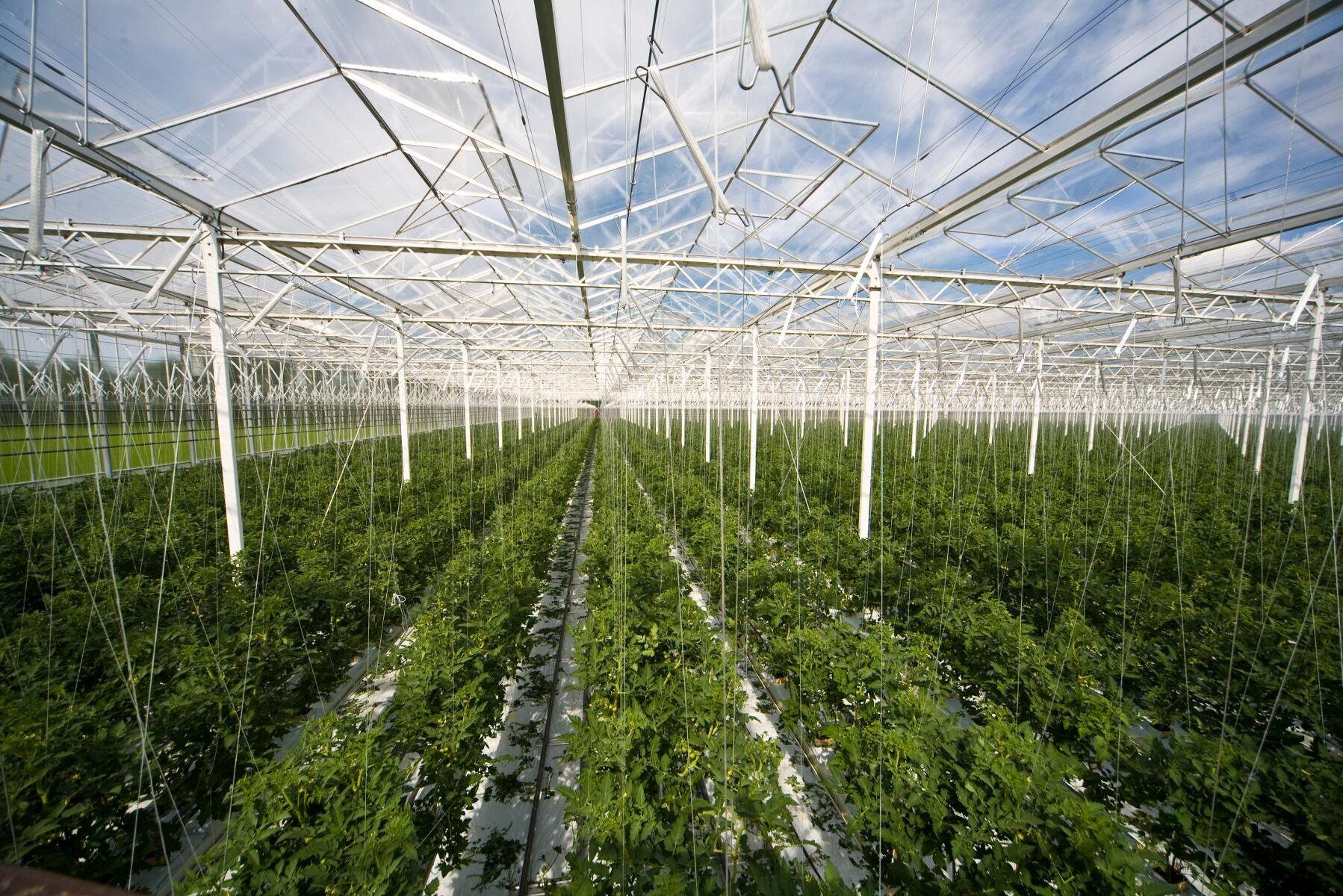 Växthusodlingens plats i det ekologiska jordbruket var en av de svårlösta frågorna när den nya ekoförordningen förhandlades fram. (Arkivbild.)