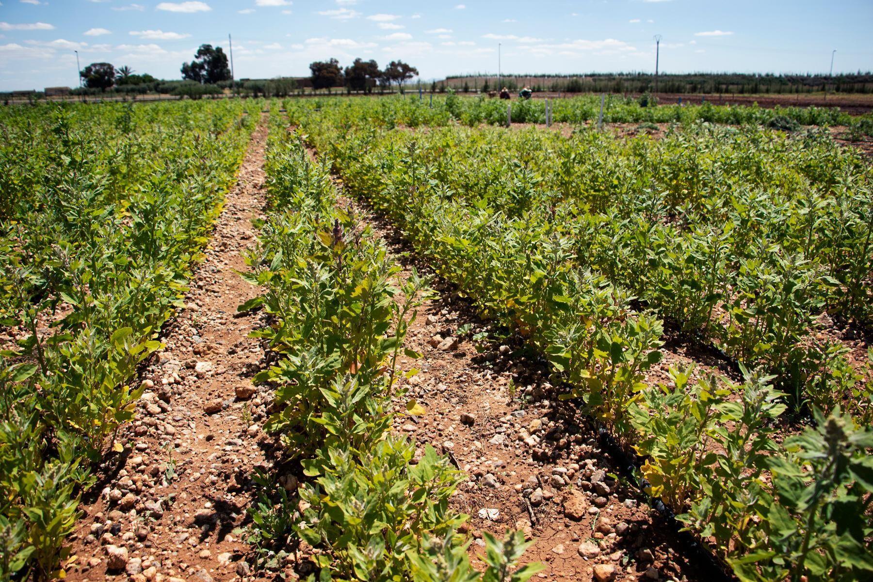 Marockos jordbruksproduktion har ökat med 60 procent sedan GMP startade 2008.