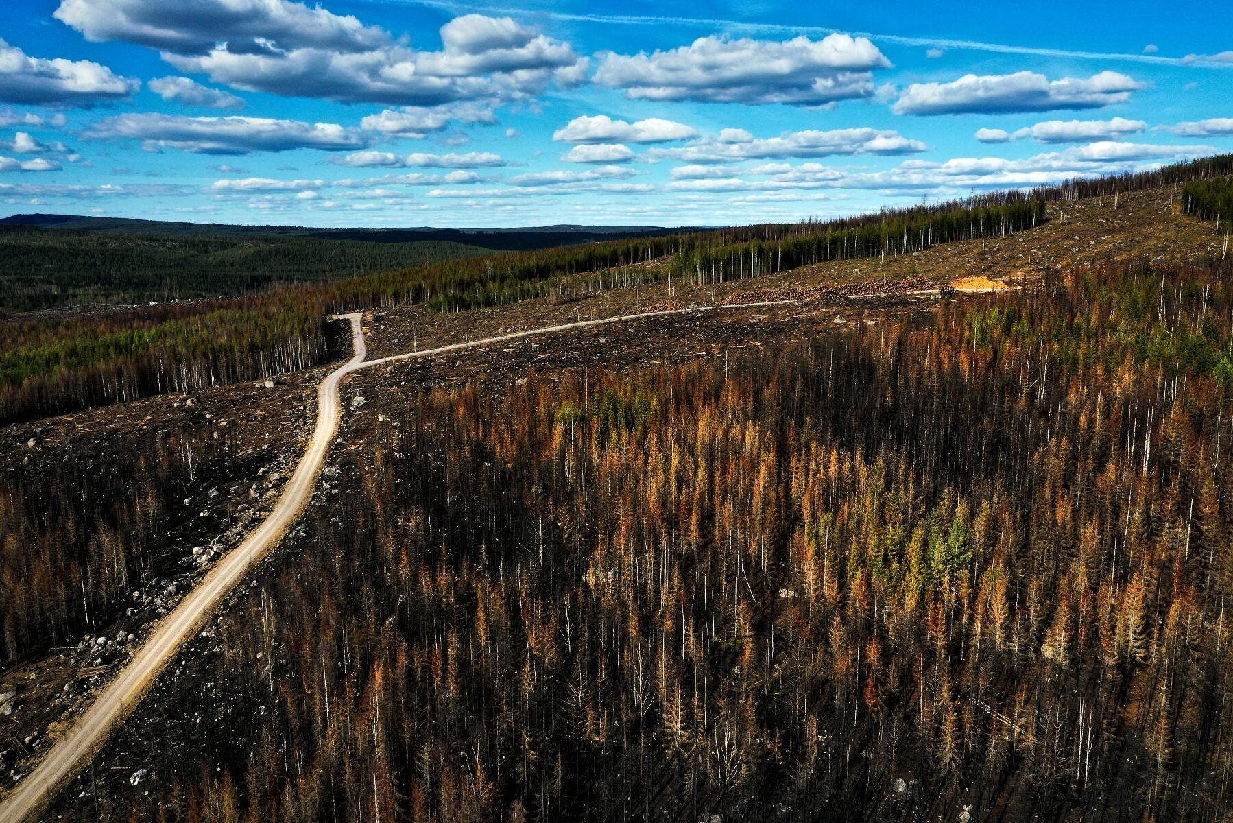 Arealen av formellt skyddad skogsmark i Sverige ökar. Arkivbild.