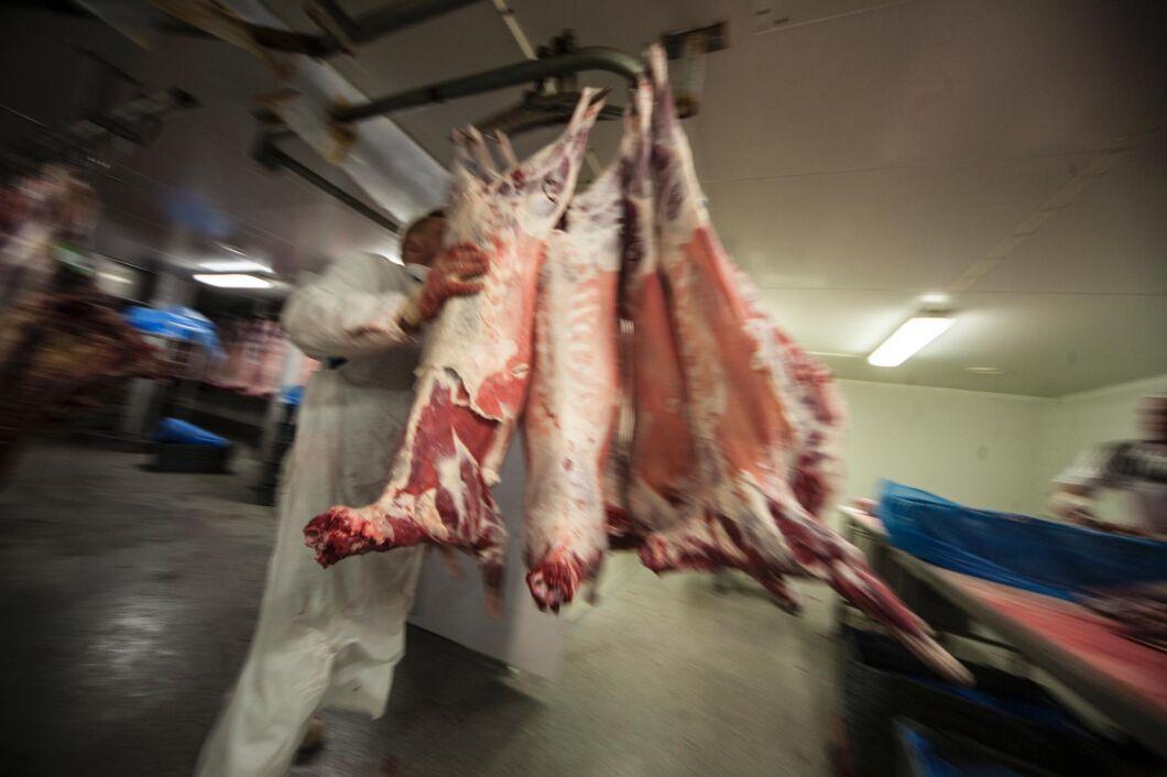 Fårkött säljs ofta som lammkött. På bilden är det dock slaktkroppar av svenska lamm.