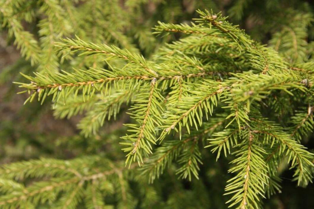 300 kronor värderades den skadade skogen med tallplantor och smågran.