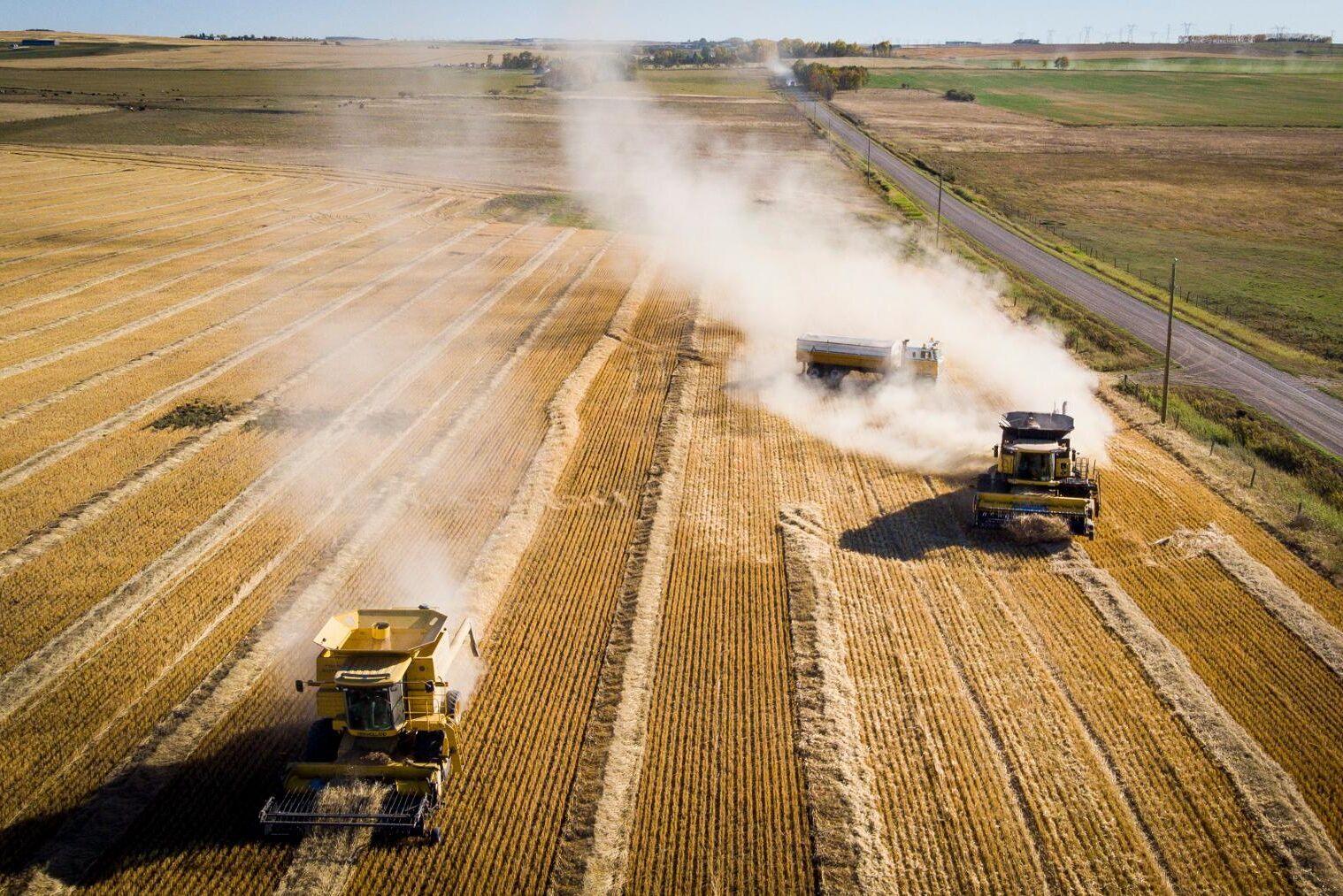 Veteskörd i Kanada – världens sjätte största producent av grödan.