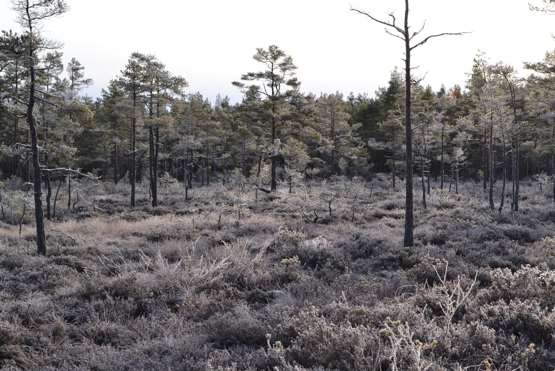 Under fjolåret avsatte finska skogsägare frivilligt 3 064 hektar mark, mest skog och myr, för skydd. (Arkivbild)