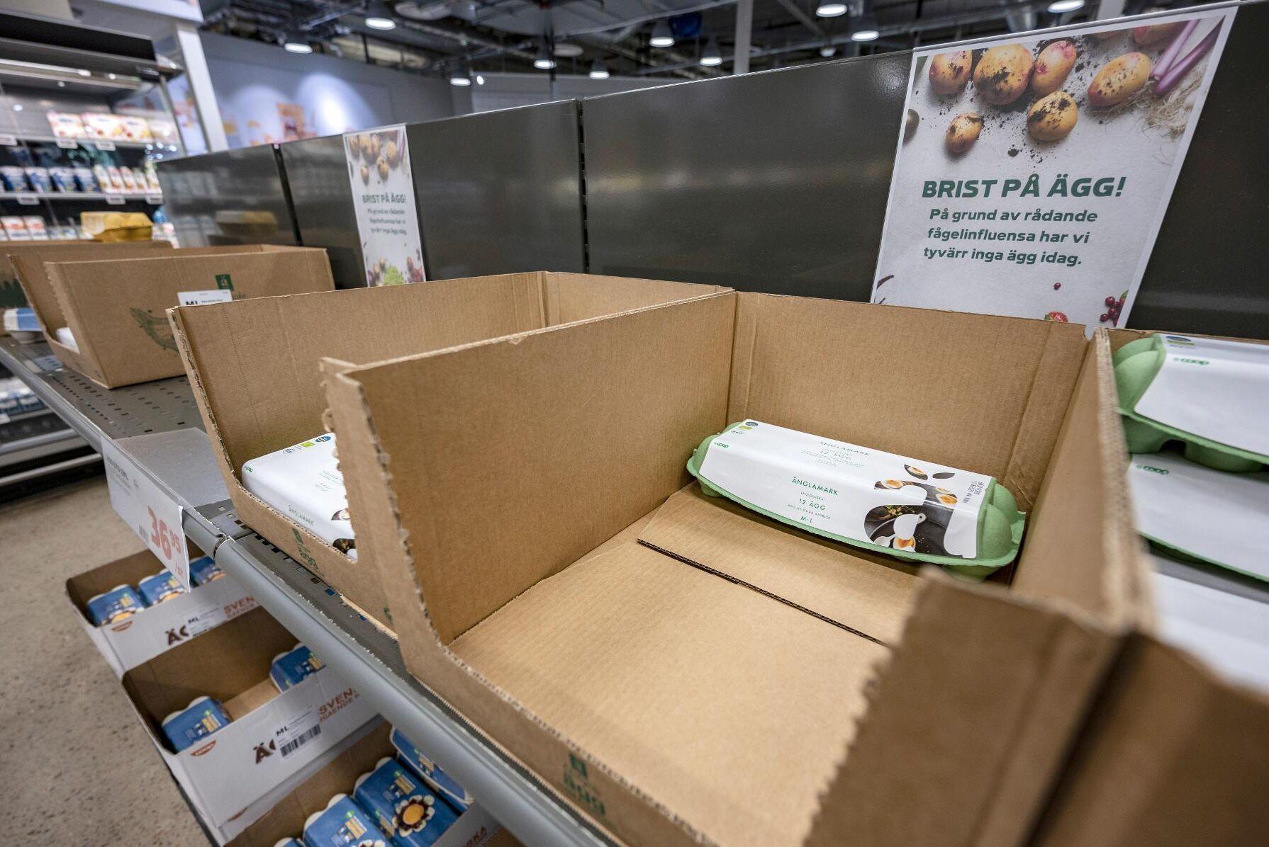 Efter en vintersäsong med det största svenska utbrottet av fågelinfluensa någonsin har det blivit brist på svenska ägg. Arkivbild.