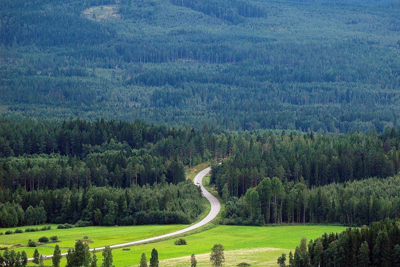 Skogutredningen vill se tydliga politiska mål för skogen och beslut om vad som krävs för att vi ska nå våra internationella åtaganden.
