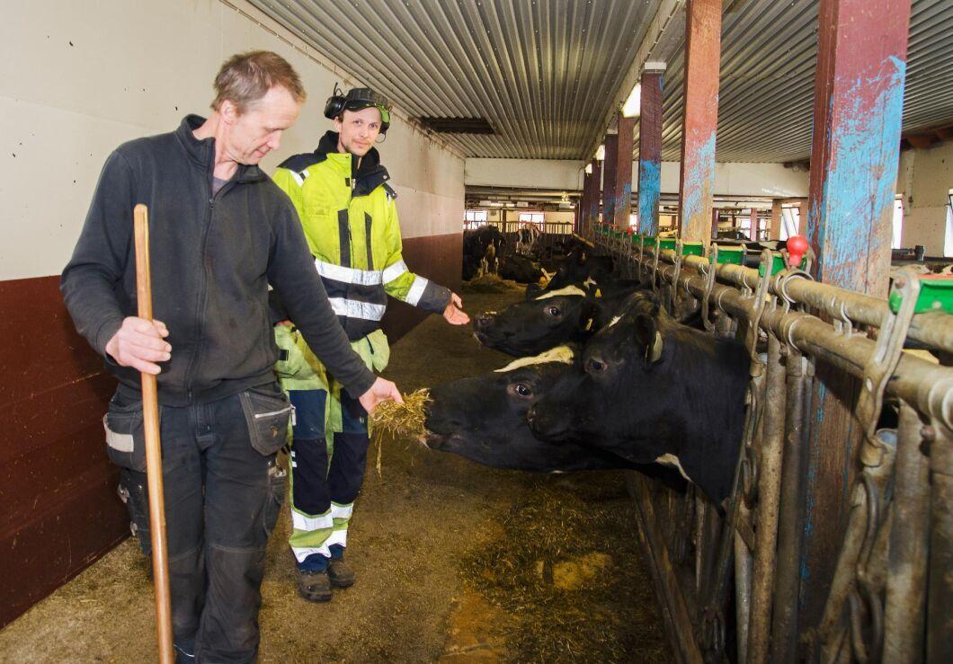 """På Kimramåla har de inga """"monsterkor"""" som mjölkar 18000 kg om året, men en jämn produktionstakt i besättningen, säger Jörgen Petersson. Här tillsammans med sonen Martin Petersson som också jobbar i verksamheten."""