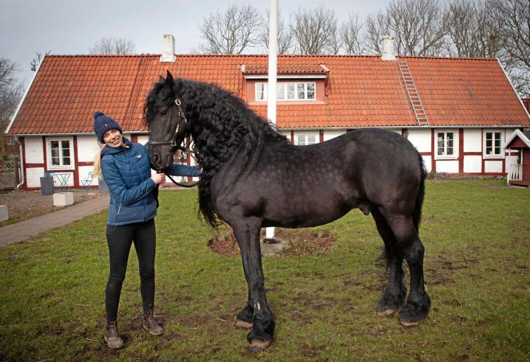 Sandra Åhs Sivertsen med Tymon 456, den enda frieserhingsten i Skandinavien som är godkänd i den holländska moderstamboken.