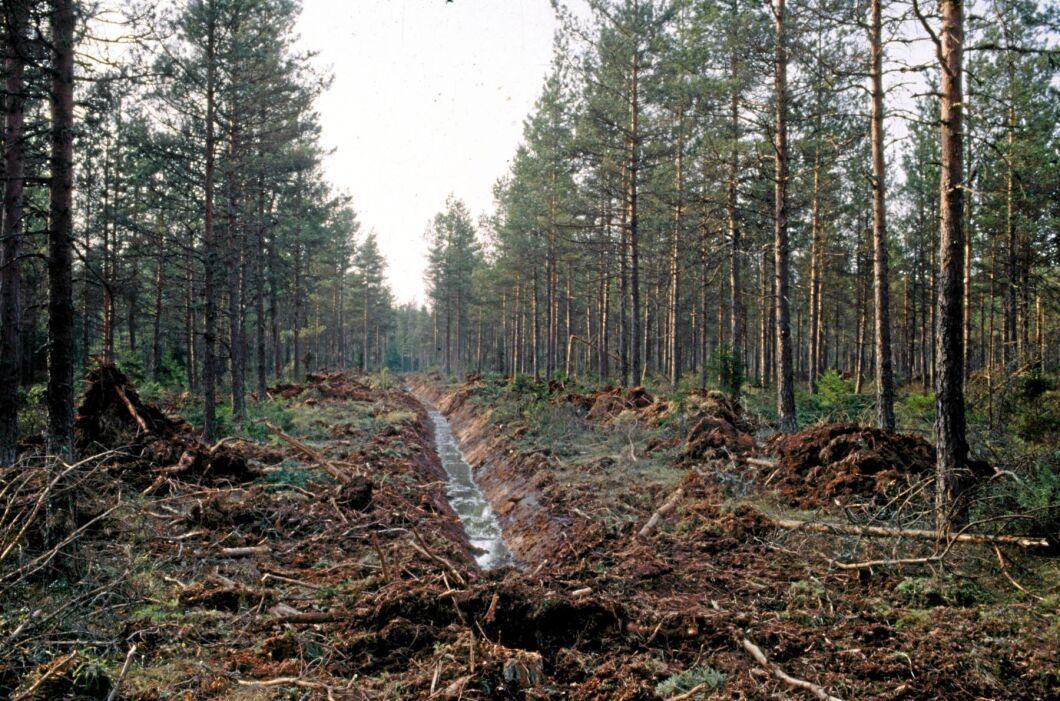 Dikade våt- och torvmark läcker växthusgaser. Nu får Skogsstyrelsen 170 miljoner kronor för återvätning (arkivbild).