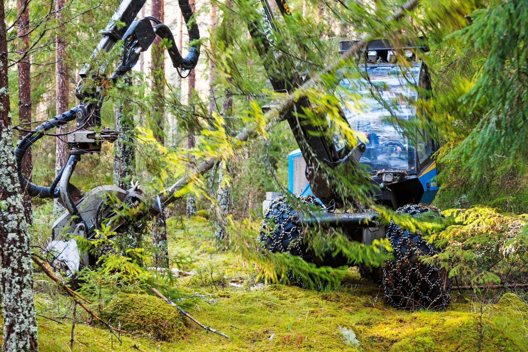 Vem som ska leda den svenska skogspolitiken, frågar Landshypotek Banks Martin Kihlberg.