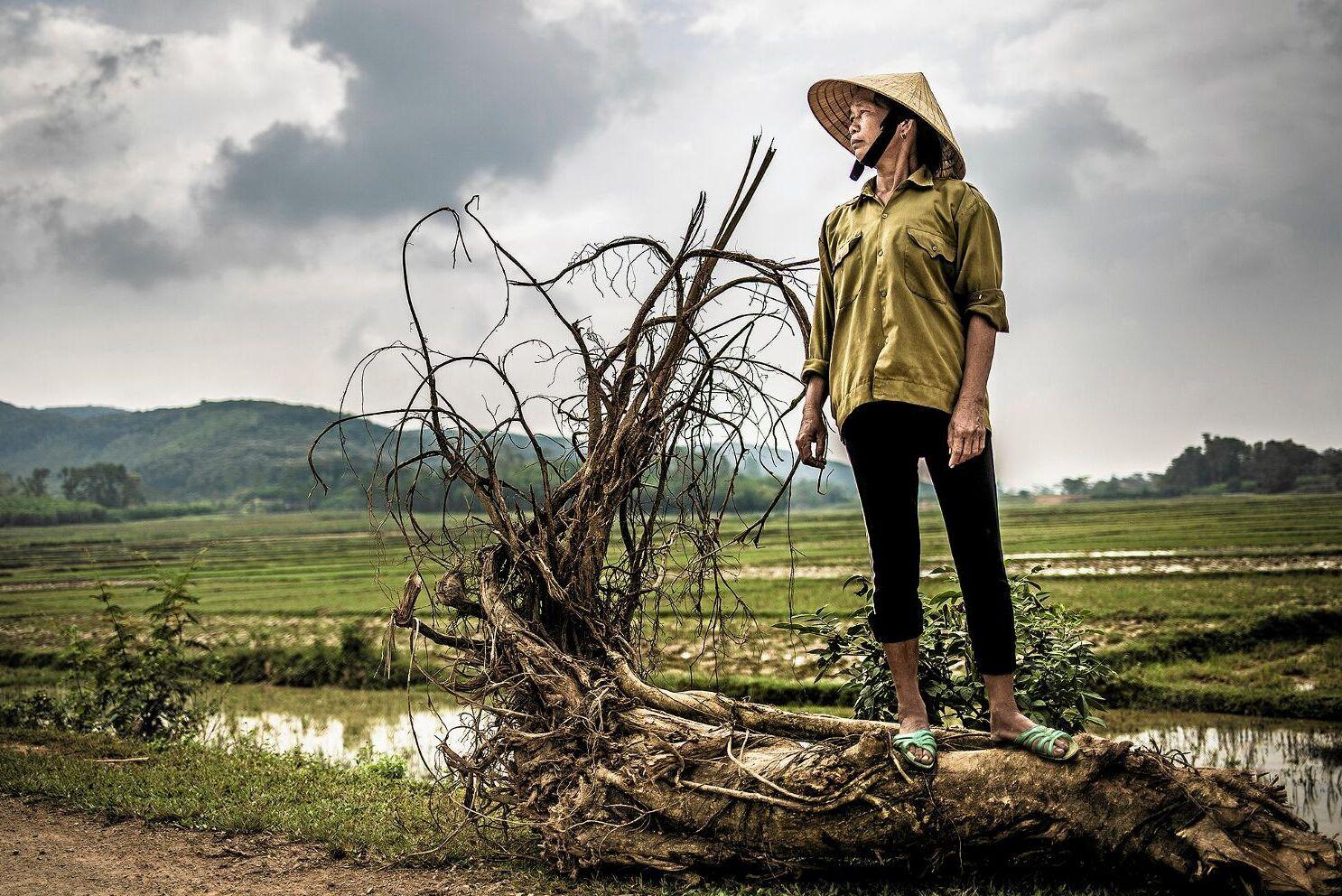 Ho Thi Phuongs majsfält i Vietnam. Arkivbild.