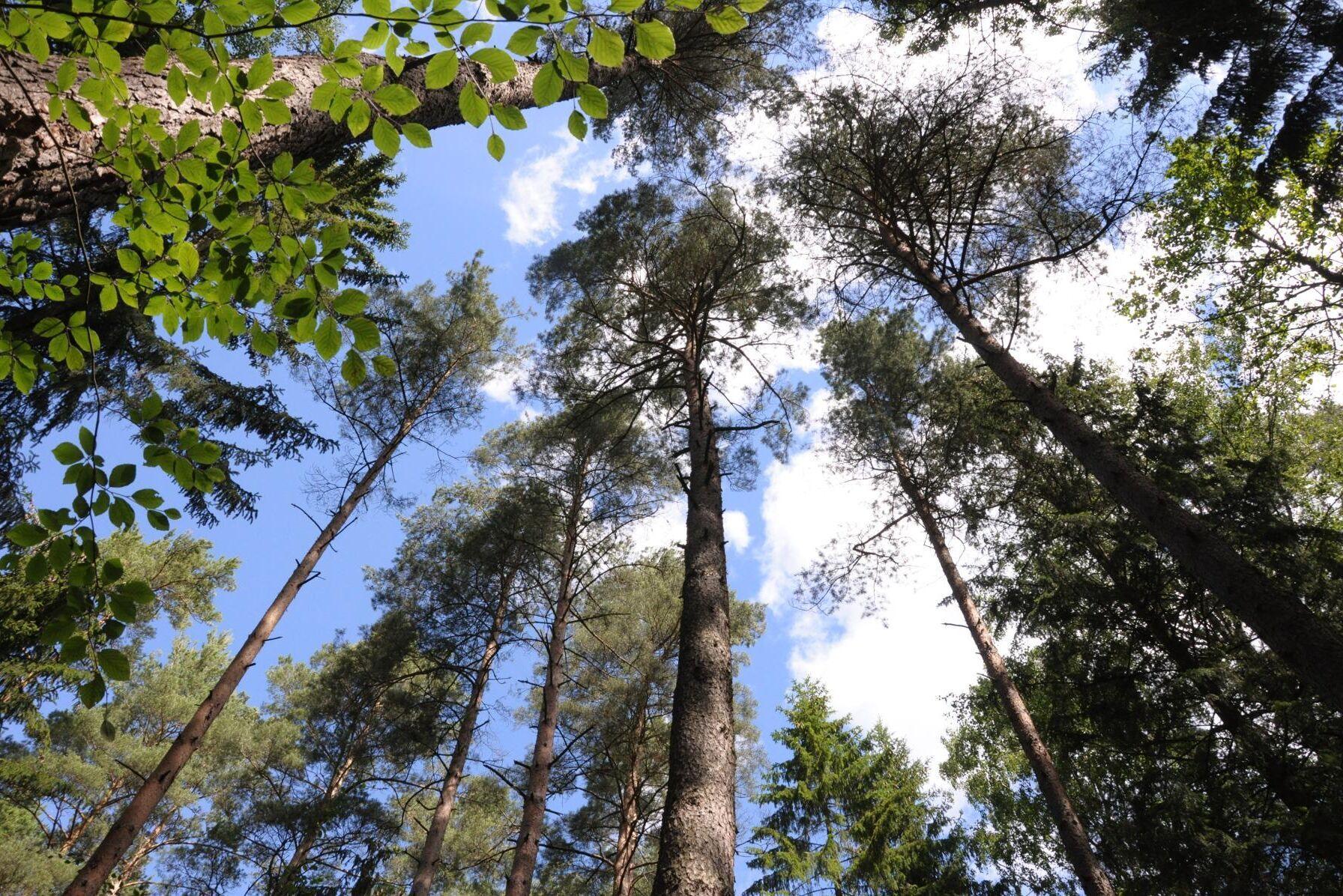 De regionala skogsstrategierna får ytterligare sju miljoner kronor i stöd och sammanlagt har 42 miljoner delats ut sedan 2018.