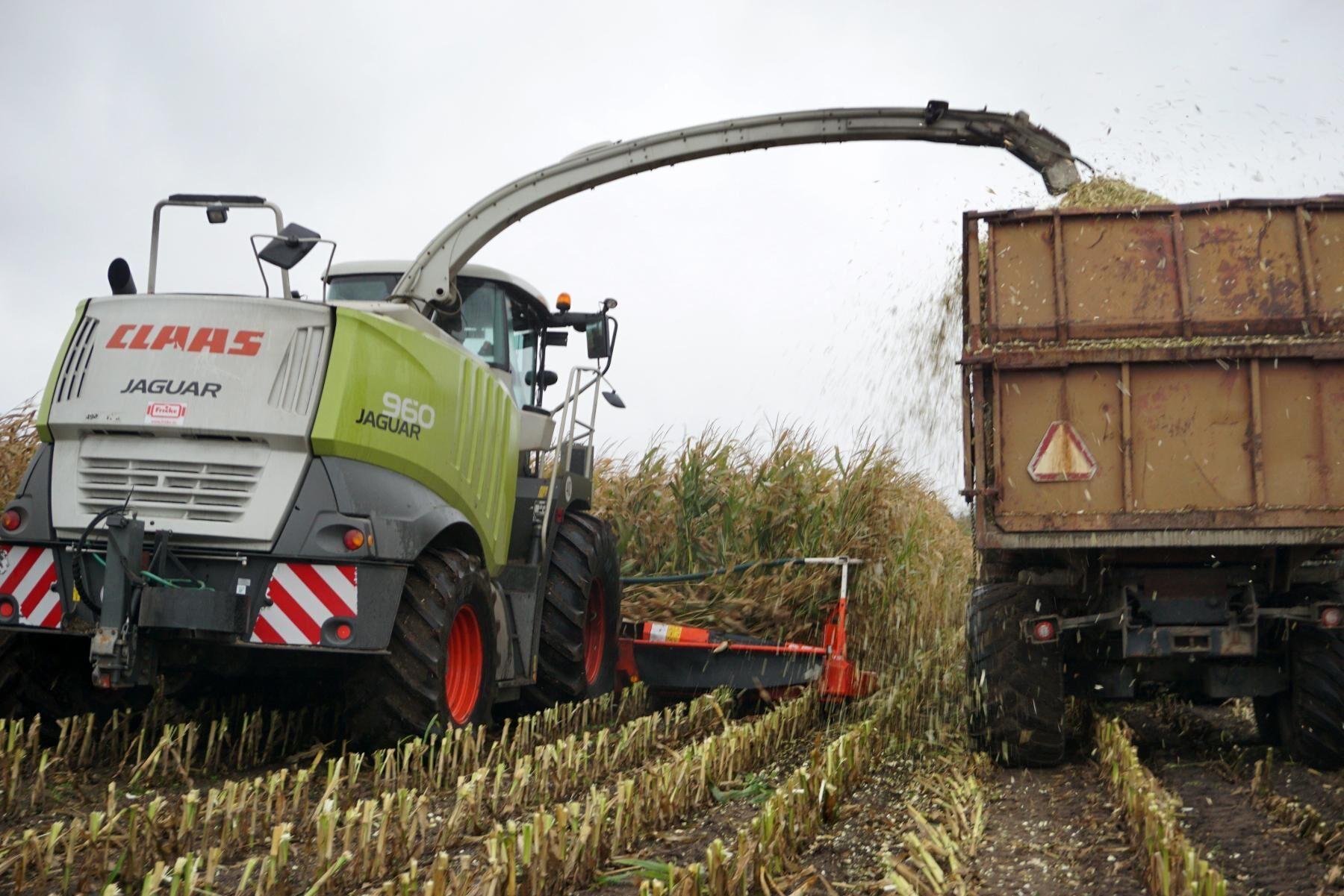 Det dolda stålröret i majsfältet orsakade skador för 370 000 danska kronor. Maskinen på bilden har inget samband med händelserna i artikeln.