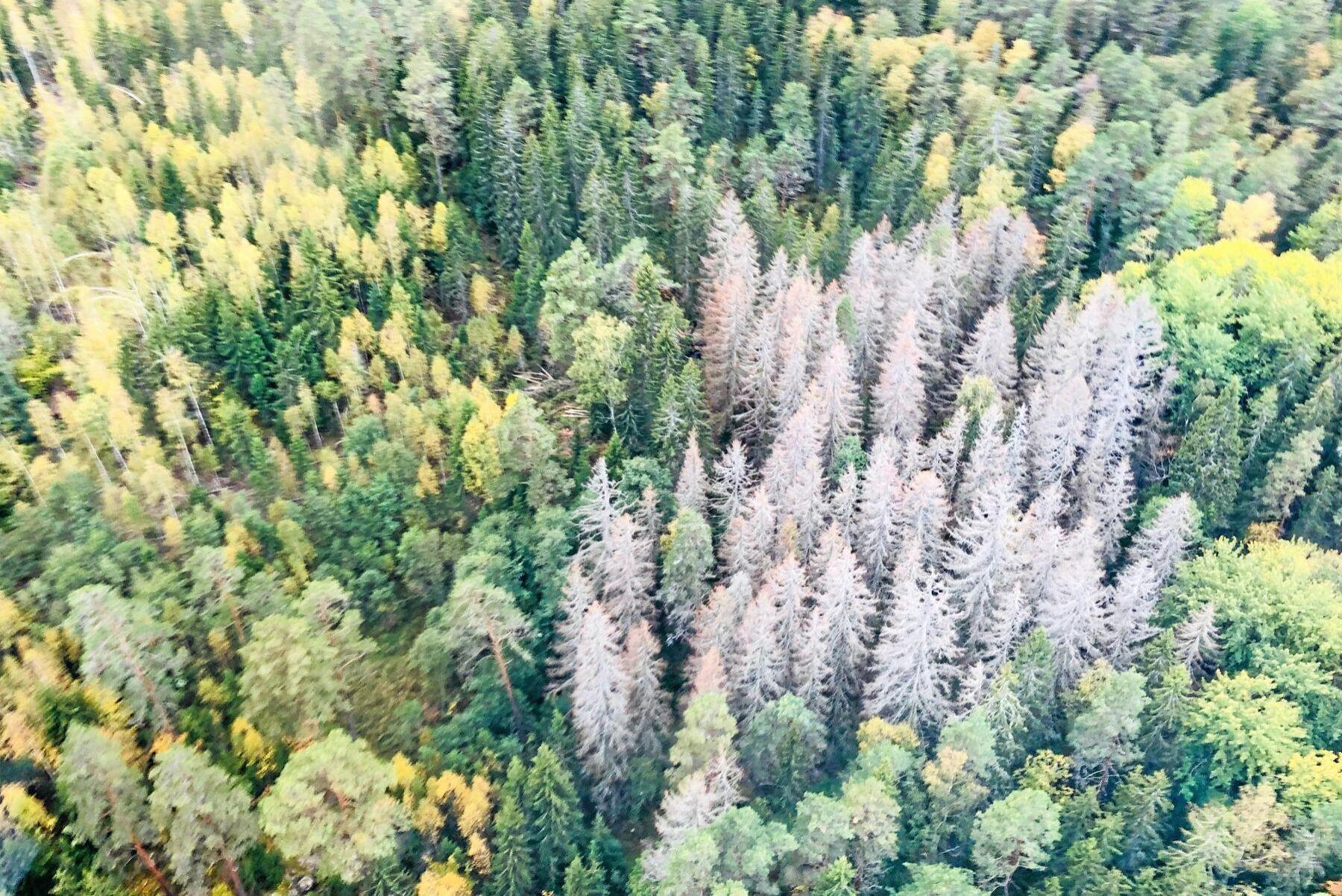 Både skadekostnaderna för skog och försäkringsbolagens kostnad för återförsäkring ökar. Det kan komma att påverka premierna framöver.