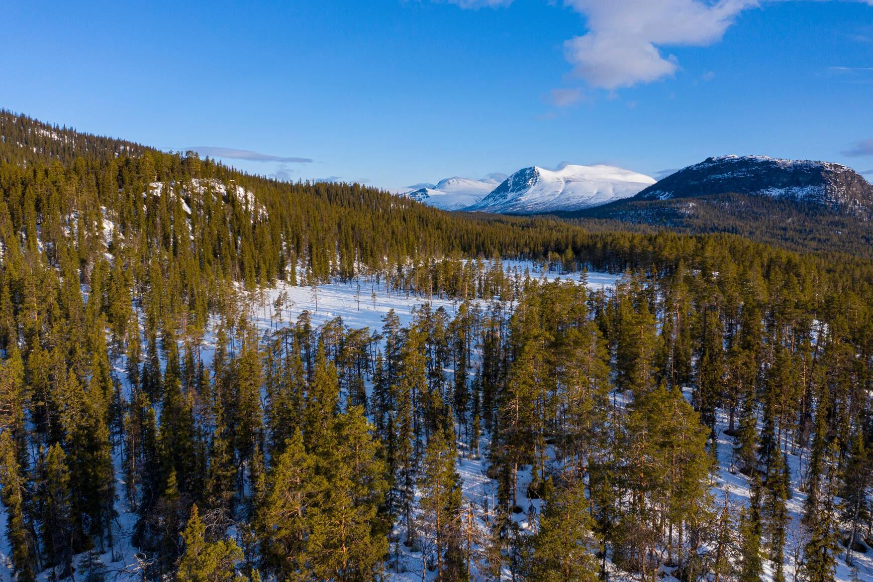 Ersättningar för fjällnära skog hotar att slå ut annan naturvård, menar myndigheten i ett brev till regeringen. Arkivbild.