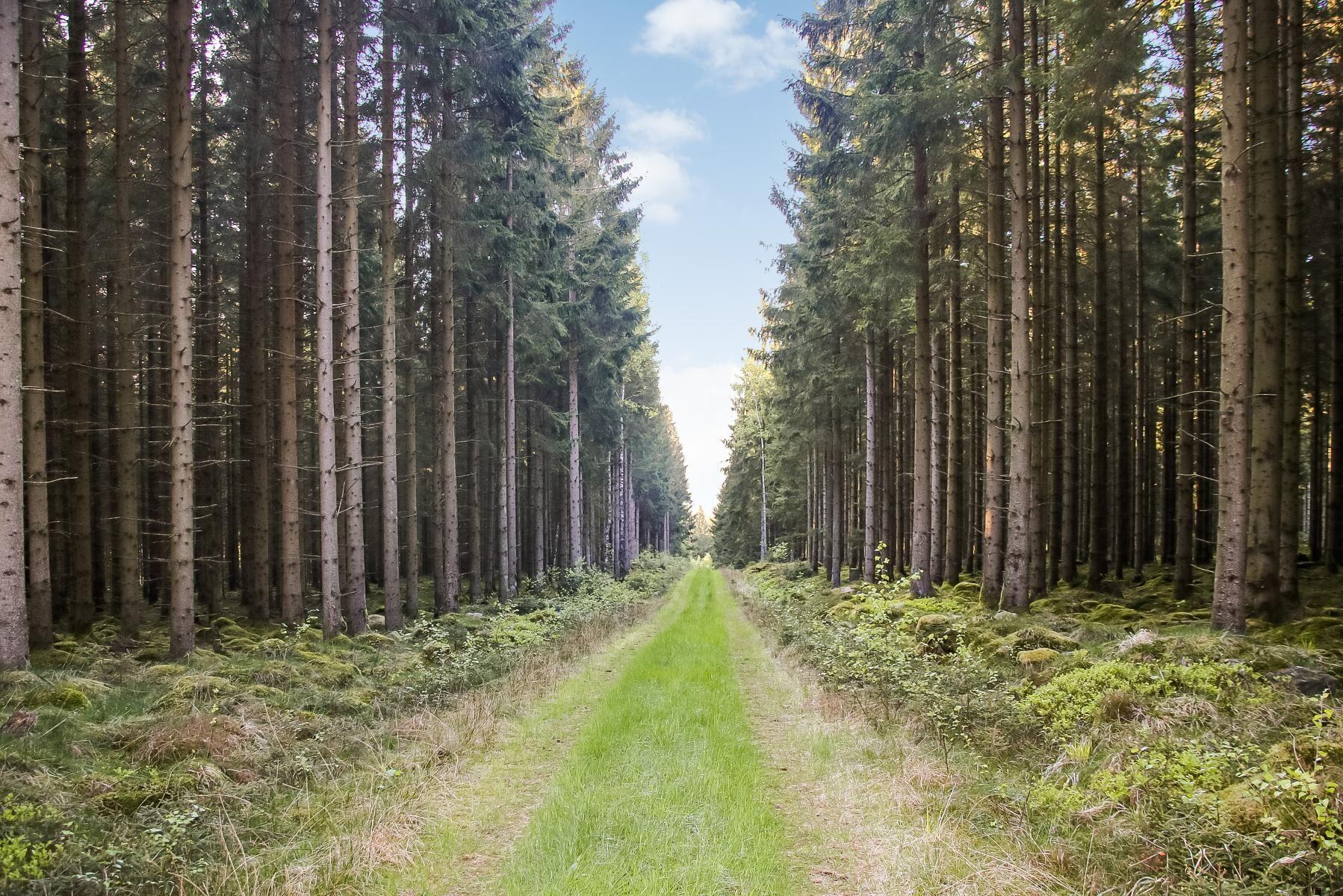 Skogsfonden Silvestica Green Forest köper 5 200 hektar skog i Halland av Stora Enso, men säljer vidare 1 400 till skogsägare i närområdet.