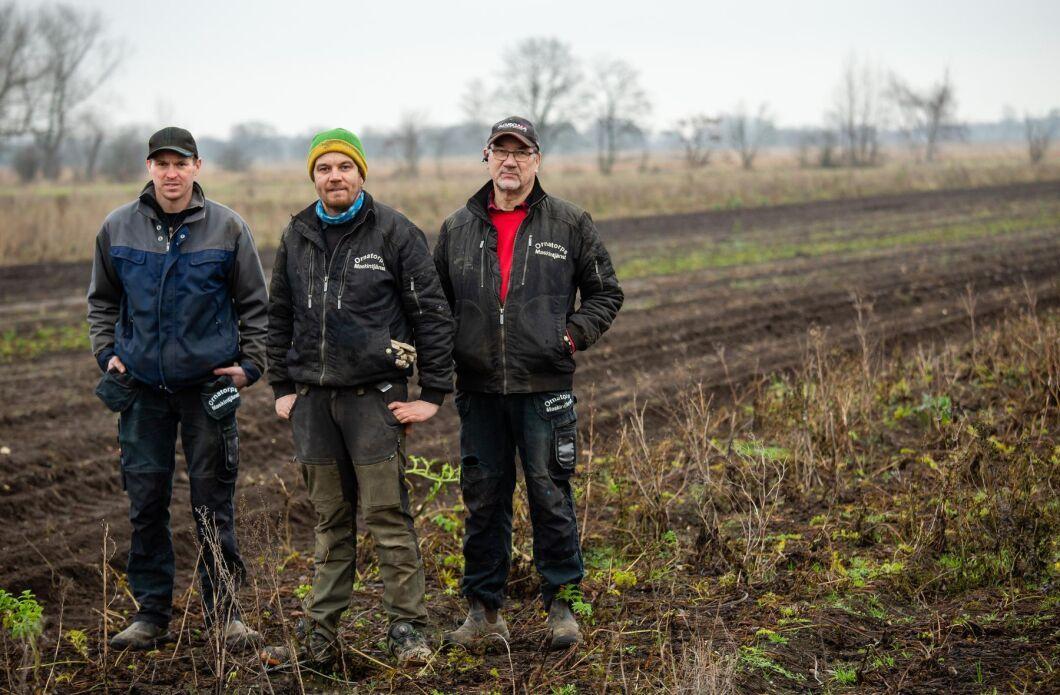 Peter, Stefan och Karl-Gunnar Philipsson driver Ornatorps Maskintjänst och odlar bland annat palsternacka, potatis och rödbetor.