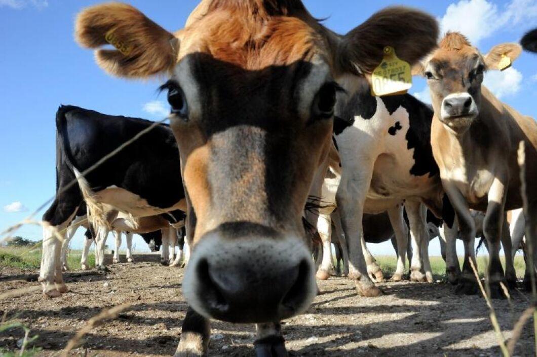 Minskad produktion och stabil efter frågan har drivit upp priset på mejeriprodukter.