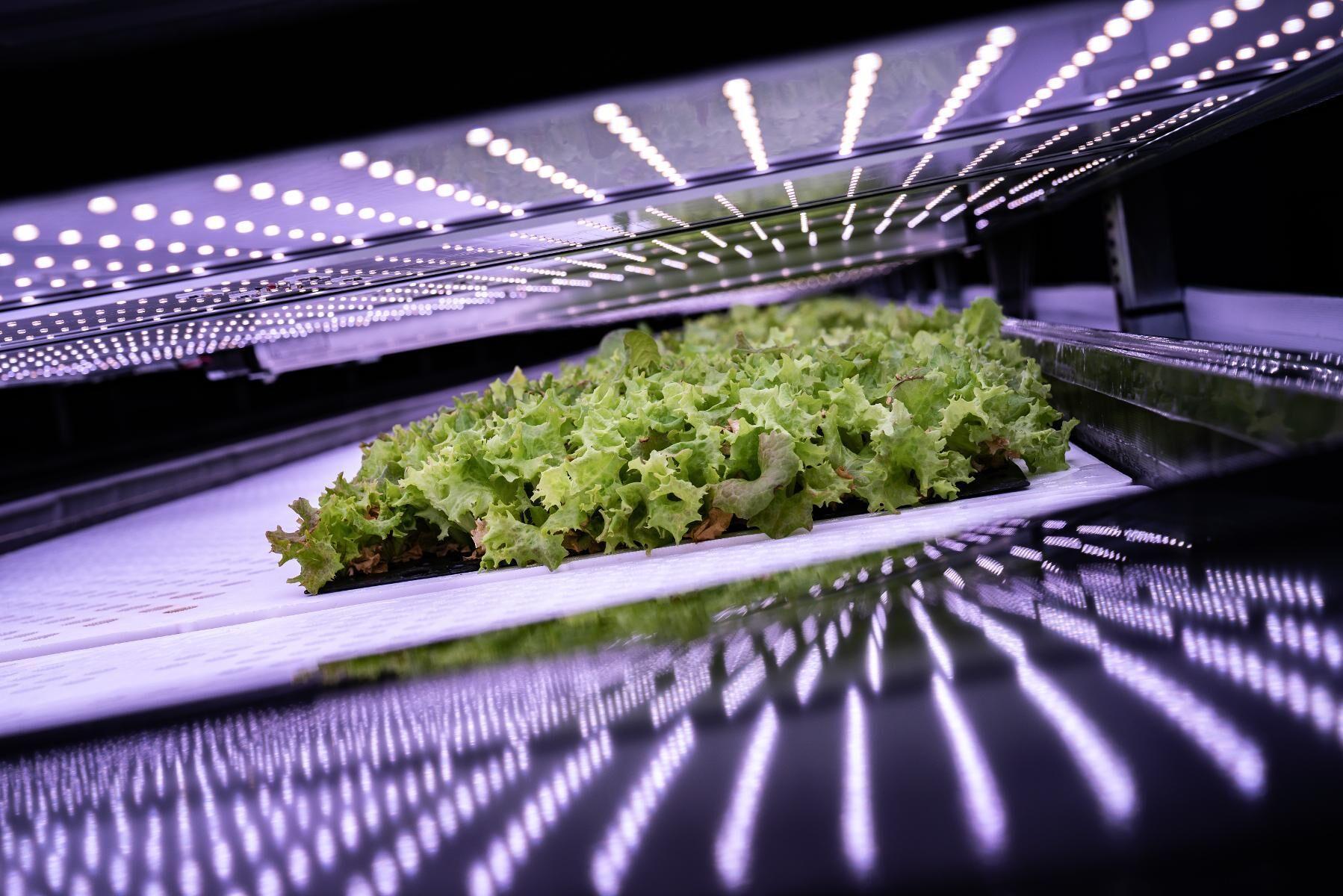 Hydroponisk odling innebär att växter odlas utan jord direkt i vatten.