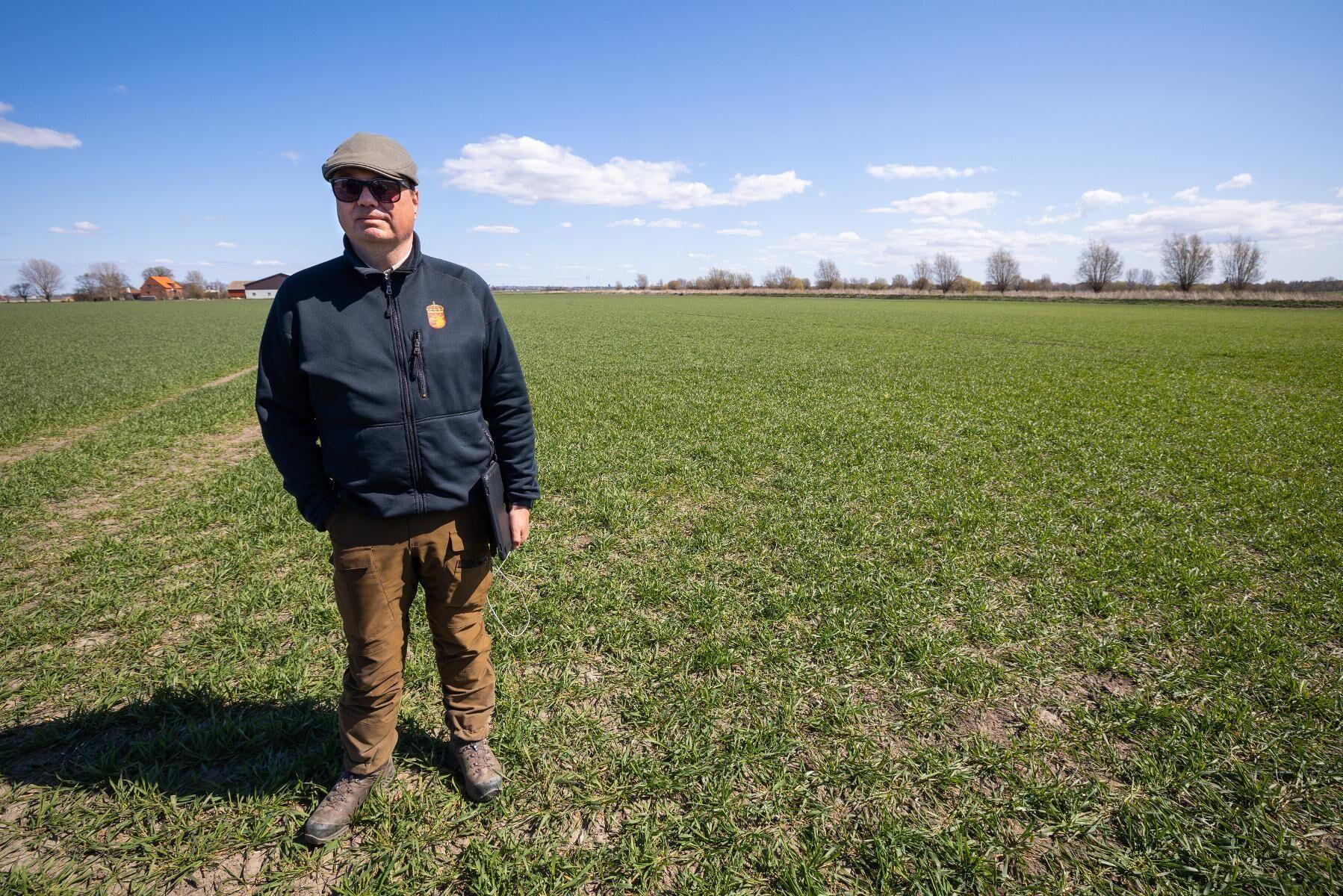 """Här beräknades den skadade ytan till 2,7 hektar. Höstveten är betad av gäss, men fortfarande grön. """"Jag har varit på stora rapsfält idag där det bara var jord"""", säger Anders Hallengren på Länsstyrelsen i Skåne."""