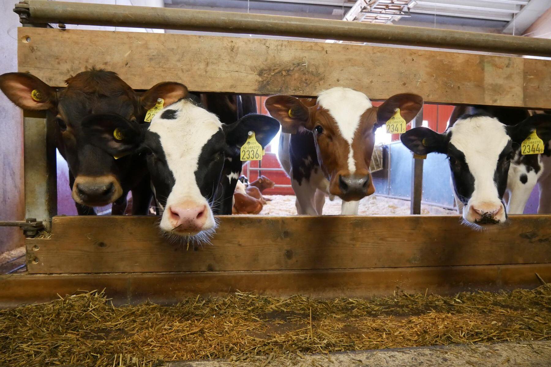 Den nya djurhälsolagen ska vara på plats nästa år.