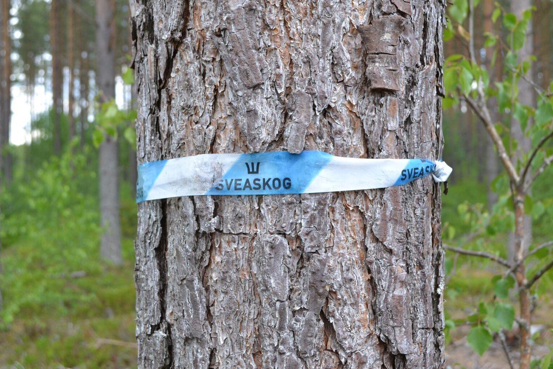 Skogsstyrelsens handläggning av Sveaskogs avverkningsanmälan i anslutning till ett Natura 2000-område får kritik av Mark- och miljödomstolen.