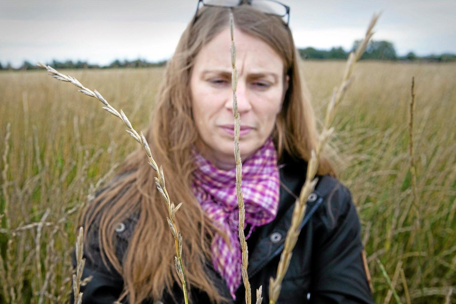 Linda-Maria Mårtensson , universitetslektor och forskare vid institutionen för biosystem och teknologi.