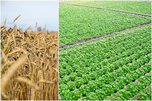 Växtodlingen och trädgårdsnäringen har förbättrat sin syn på konjunkturen sedan förra kvartalet.