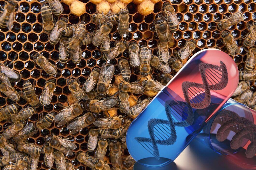 Monsanto vill rädda världens bin med RNA-teknik. RNA finns i alla levande organismer. Många virus har som exempel hela sitt genom uppbyggt av RNA.