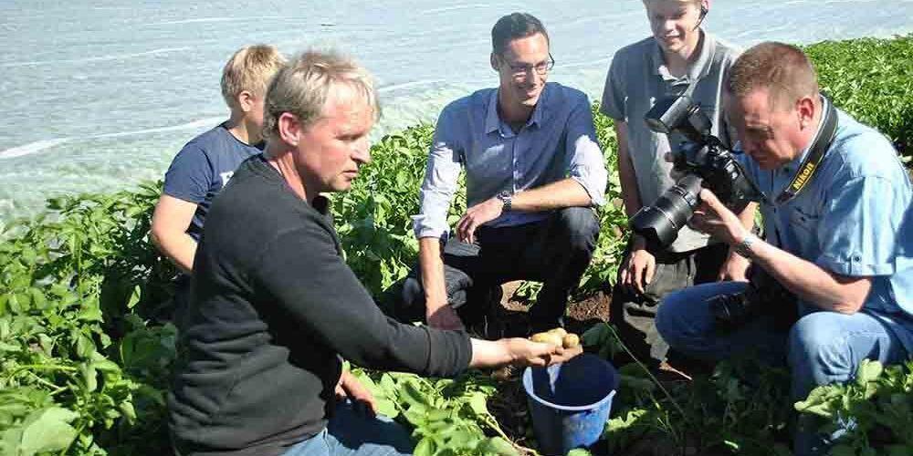 Potatisodlaren Arnold Ebbesson plockar upp den första frilansodlade färskpotatisen.