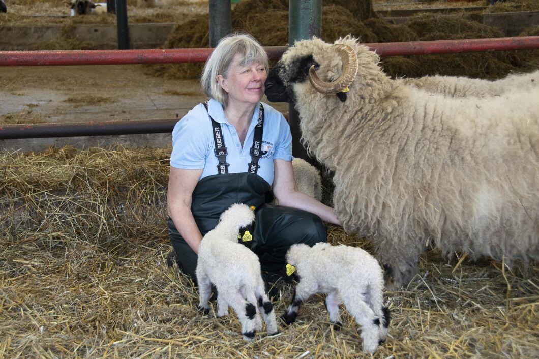 Marita Tauni är veterinären som blev fårbonde och som dessutom utvecklat en strategi för att få tackorna att lamma under dagtid.