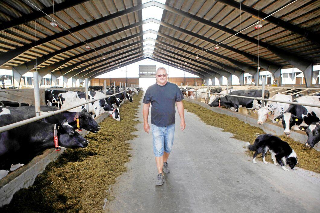Janne Hansson driver en av Sveriges största mjölkgårdar alldeles utanför brandområdet i närheten av Ljusdal.