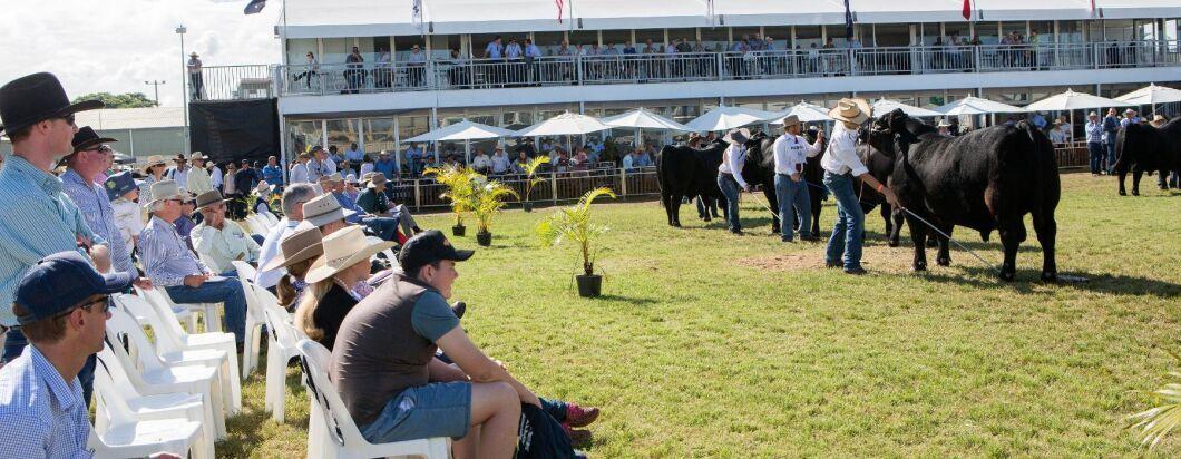 Under lantbruksmässan Beef Australia hålls flera uppvisningar och bedömningar av nötdjur.