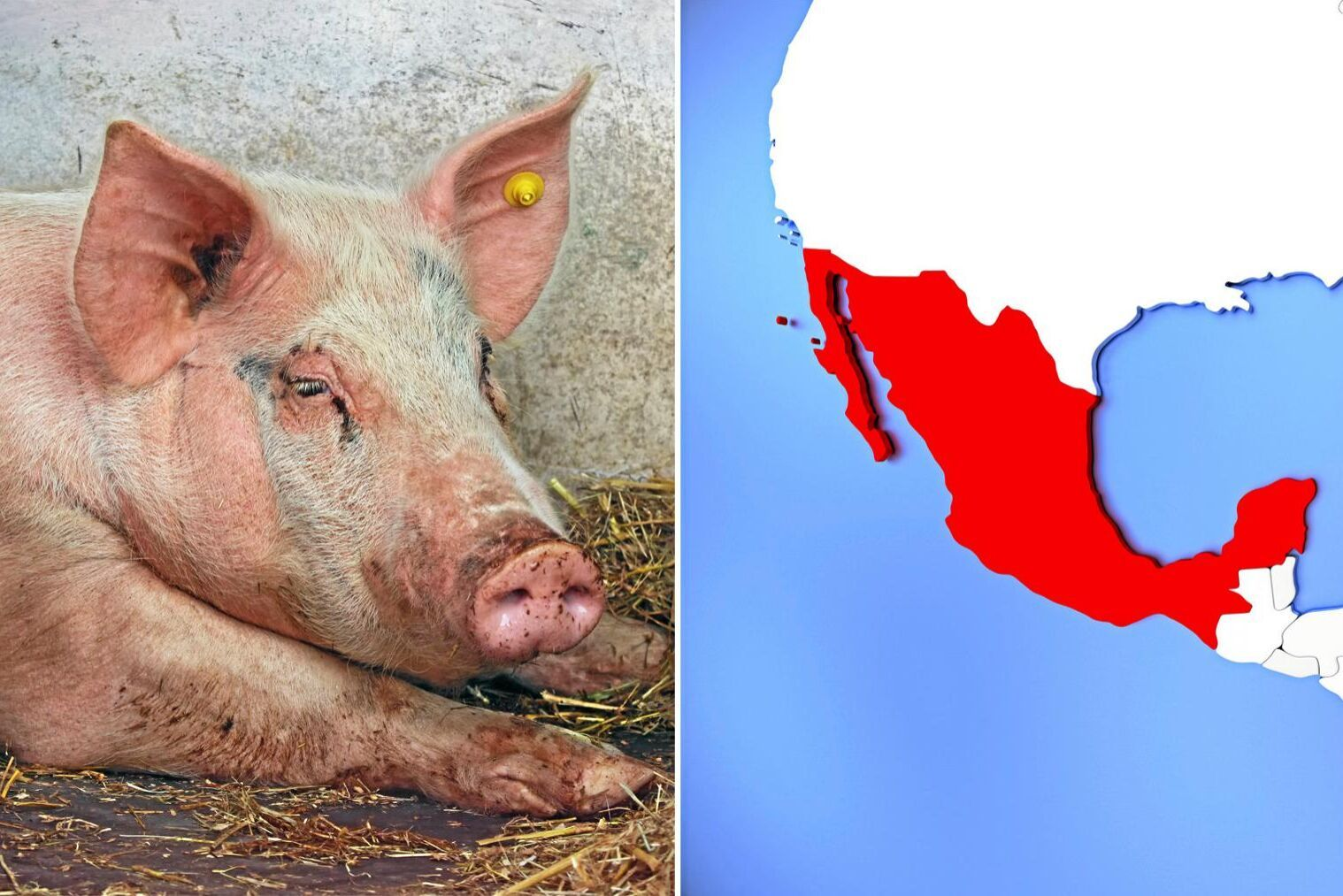 Förra året stod USA för 90 procent av Mexikos importerade fläsk och nu öppnar landet upp för att importera från Kanada eller EU.