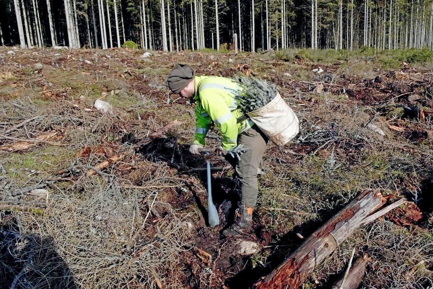 Från och med på måndag är det fritt fram för säsongsarbetare från andra länder att komma till Sverige för att till exempel plantera skog.