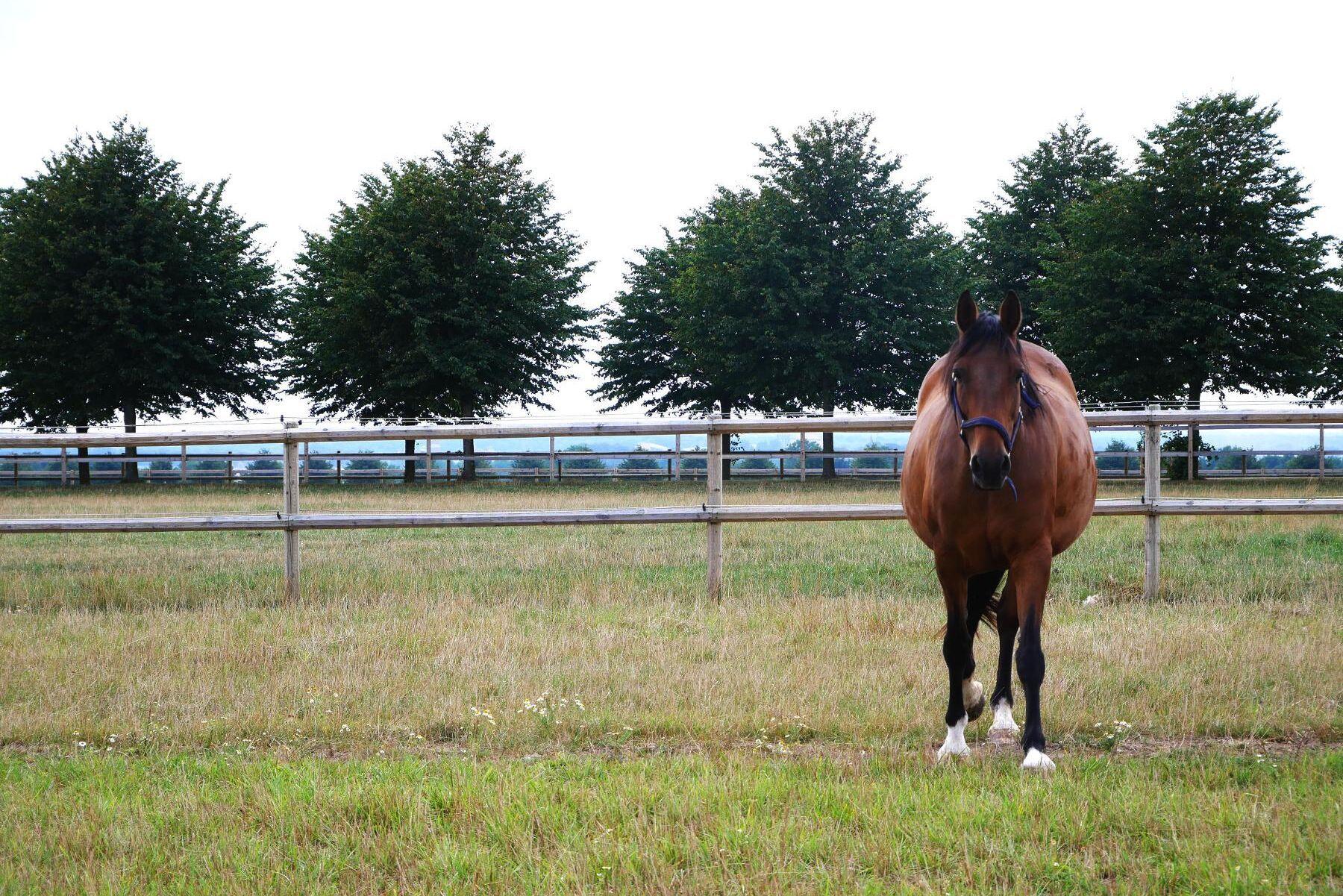 Greppa Näringen lanserar nu en ny miljörådgivning för gårdar med mer än 15 hästar.