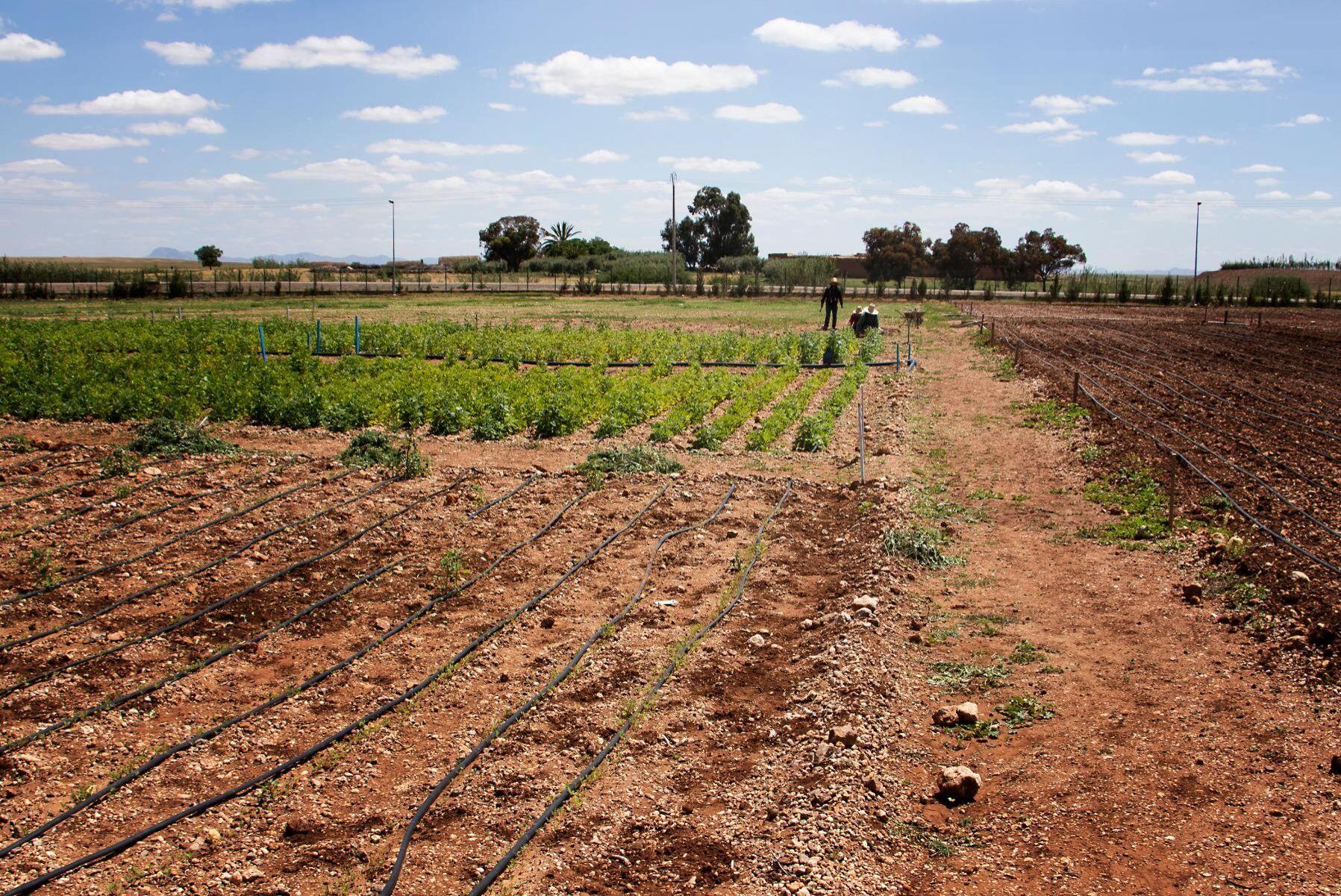 Marocko har sedan 2008 genomfört stora förändringar i jordbrukssektorn.