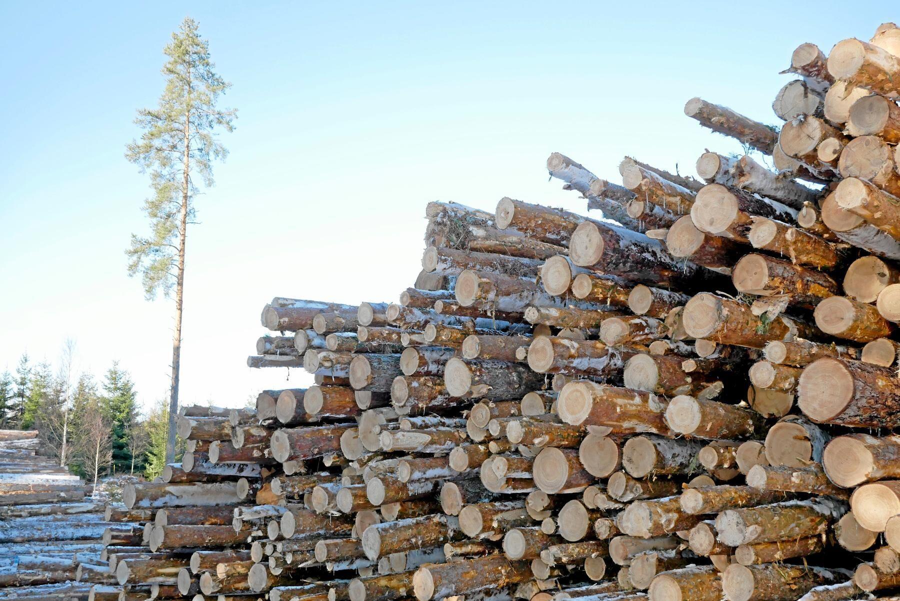 Den svenska referensnivån för avverkning är bestämd. Men det är inte säkert att striden är över.