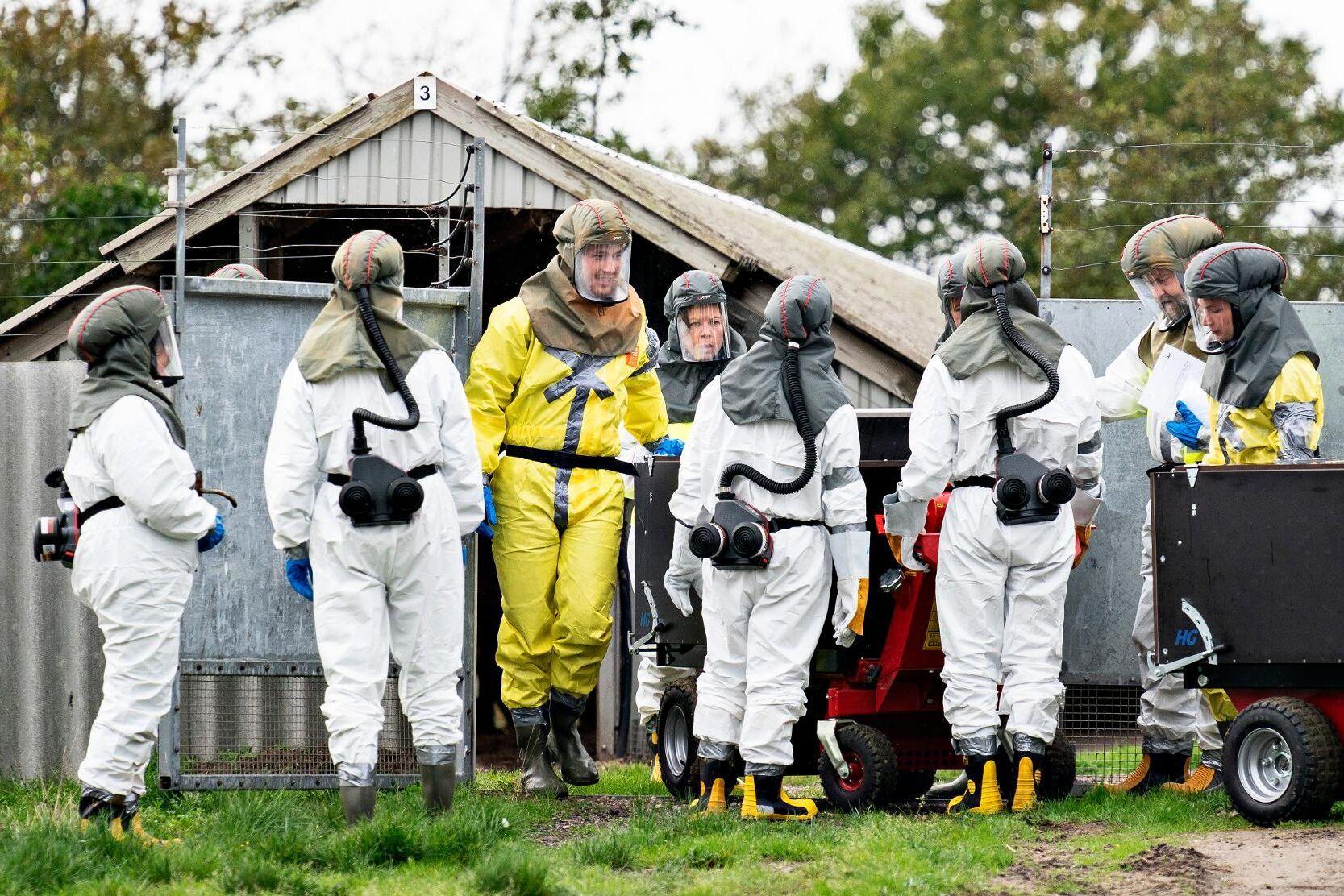 Muterat coronavirus från mink har hittats hos 214 personer i Danmark under perioden juni till oktober.
