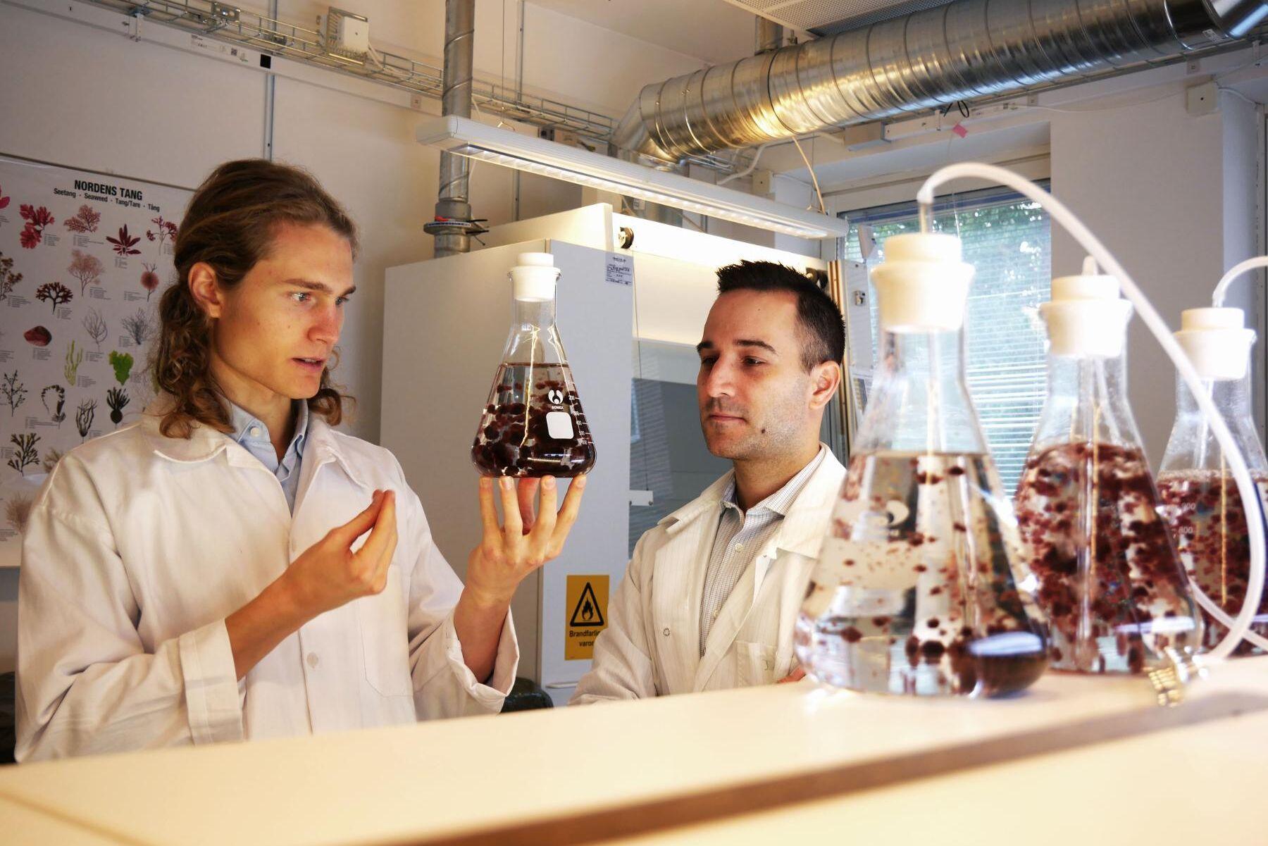Leo Wezelius, medgrundare Volta Greentech och Dr. Ioannis Dogaris, Senior Research Engineer. Algerna heter Asparagopsis taxformis.