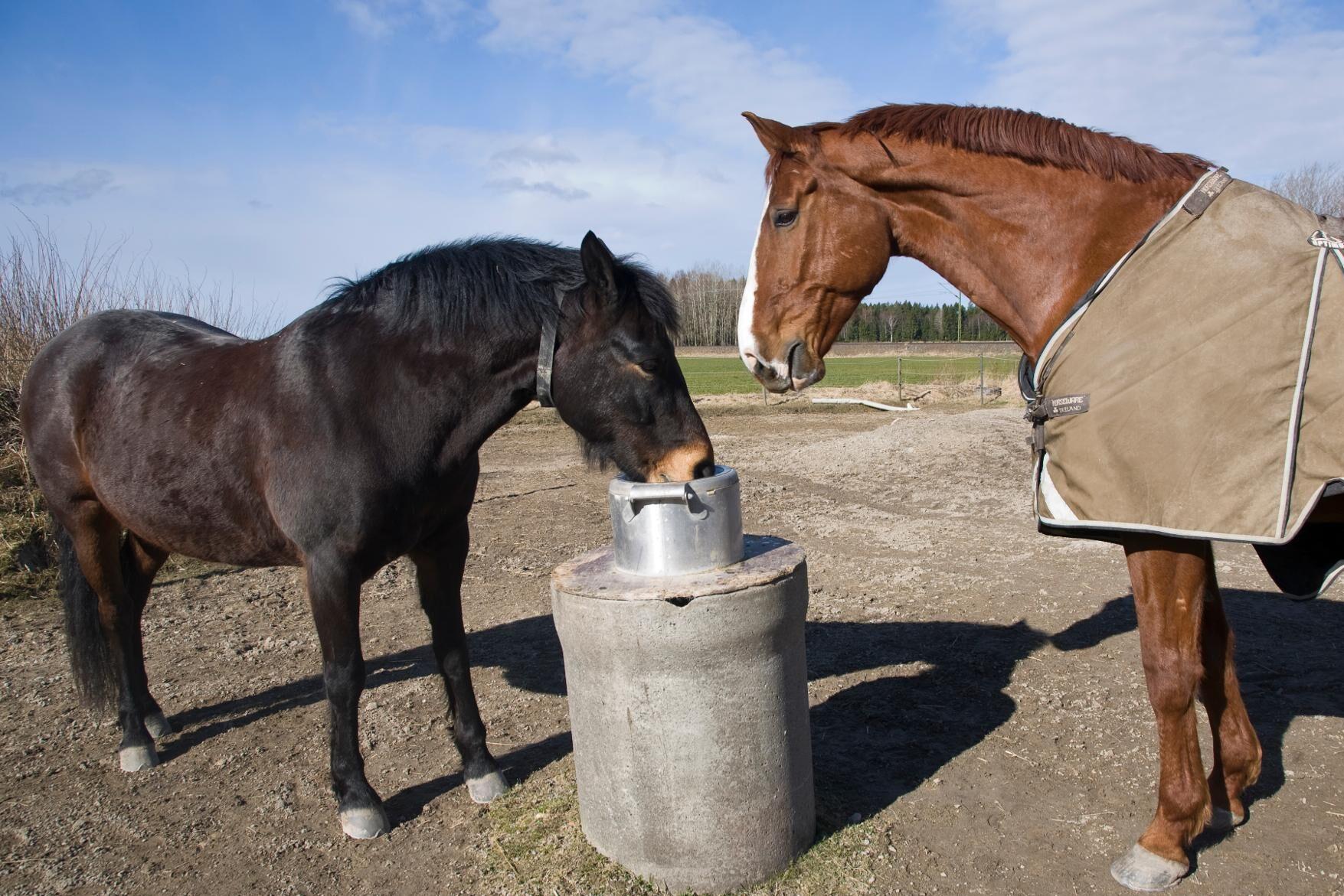 Gödselutredningen har engagerat Hästsverige under sommaren.