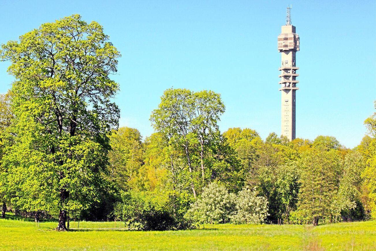 Ängarna vid Kaknästornet i Stockholm är en av många grönytor som Stockholms stad erbjuder till bönder.