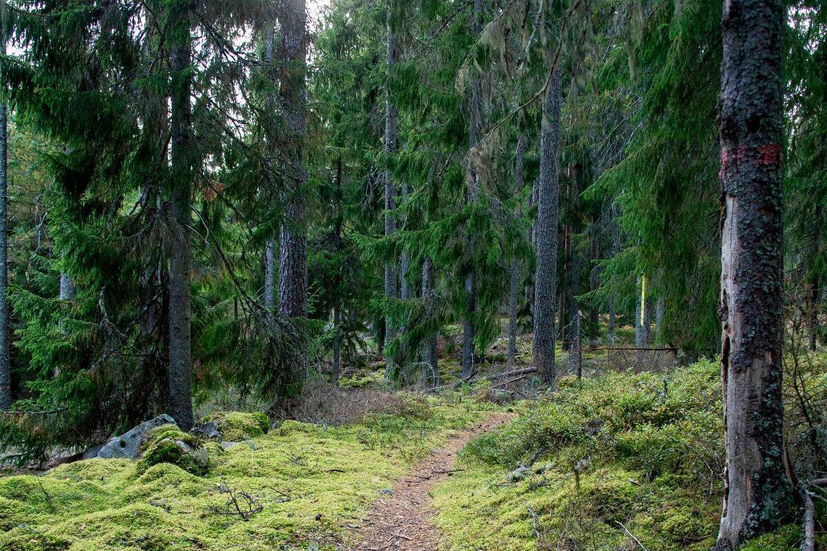 """""""Skogen kommer tillbaka. Det är det som är en förnybar process. Tala om cirkulärt skogsbruk. Det är helt fantastiskt!"""" säger kung Carl XVI Gustaf när han gästar Värvet. Arkivbild."""