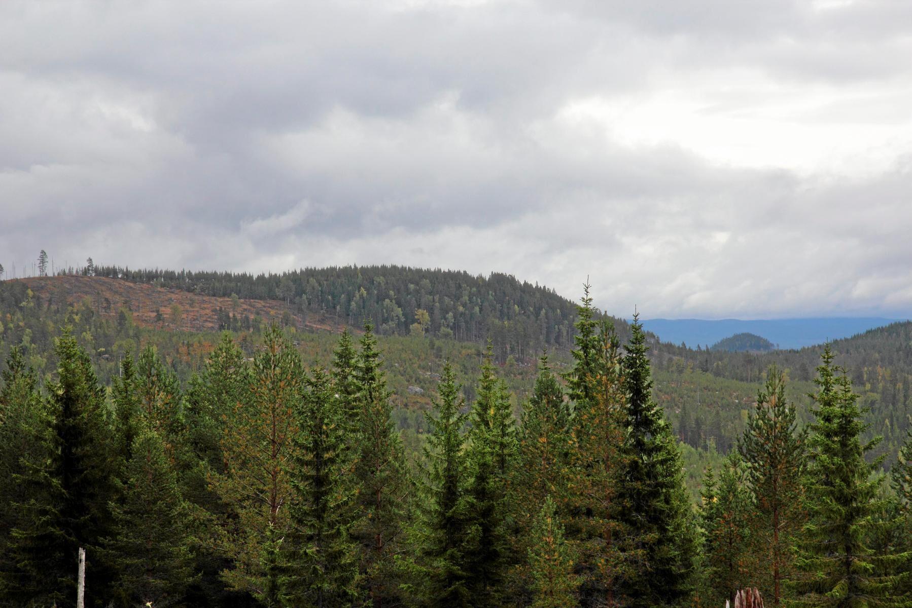 Uppsala är enda län där skogspriserna har sänkts. Arkivbild på skogslandskap.