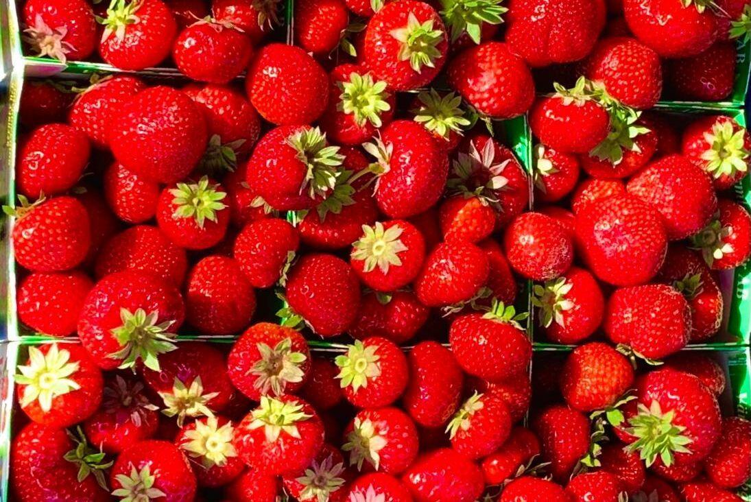 Evelina Cederholm på Värmlandsbär hoppas att alla jordgubbar är redo till midsommar.
